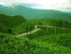 Kathmandu and Ilam Tours Packages
